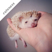 The Cutest Little Hedgehog in the World by Shota Tsukamoto