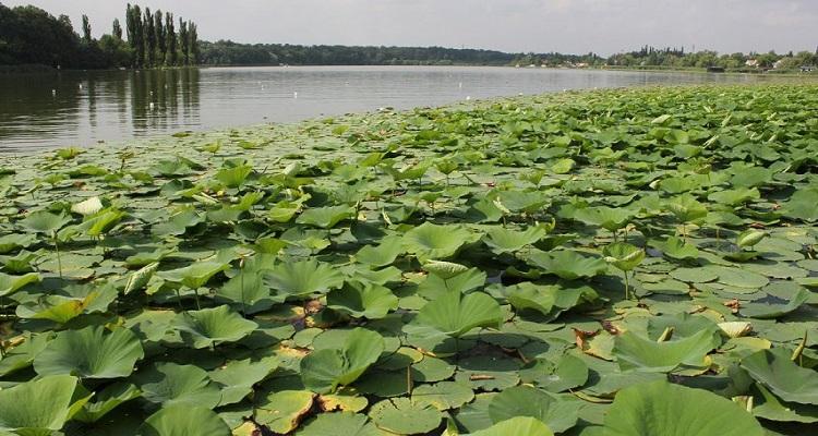 Poze și imagini lacul Snagov din București, județul Ilfov