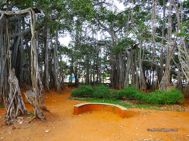 Big Banyan Tree is Spread Over the Area of 3 Acres, Bangalore