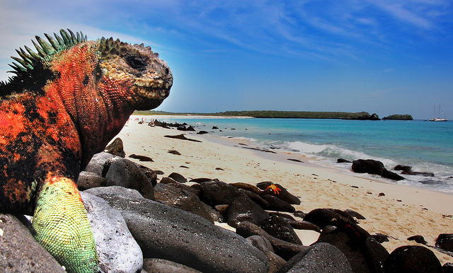 The Galapagos – best for wildlife