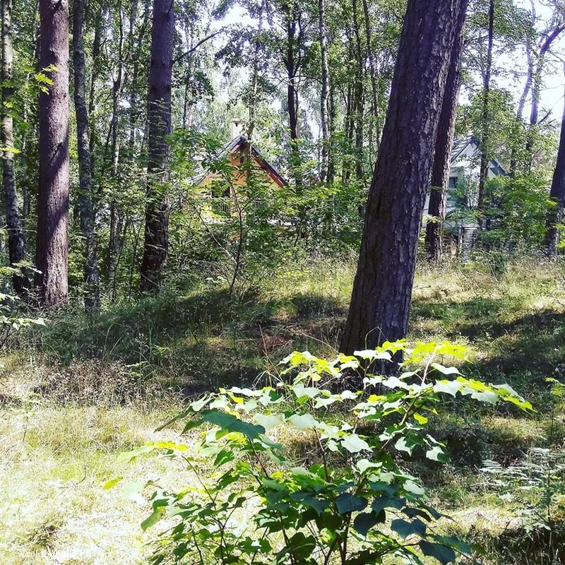 las, ośrodek nad morzem, ośrodek wypoczynkowy w lesie, Międzywodzie, osrodek w Międzywodziu