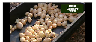 http://www.gardenersworld.com/how-to/grow-plants/how-to-grow-overwintering-onions/