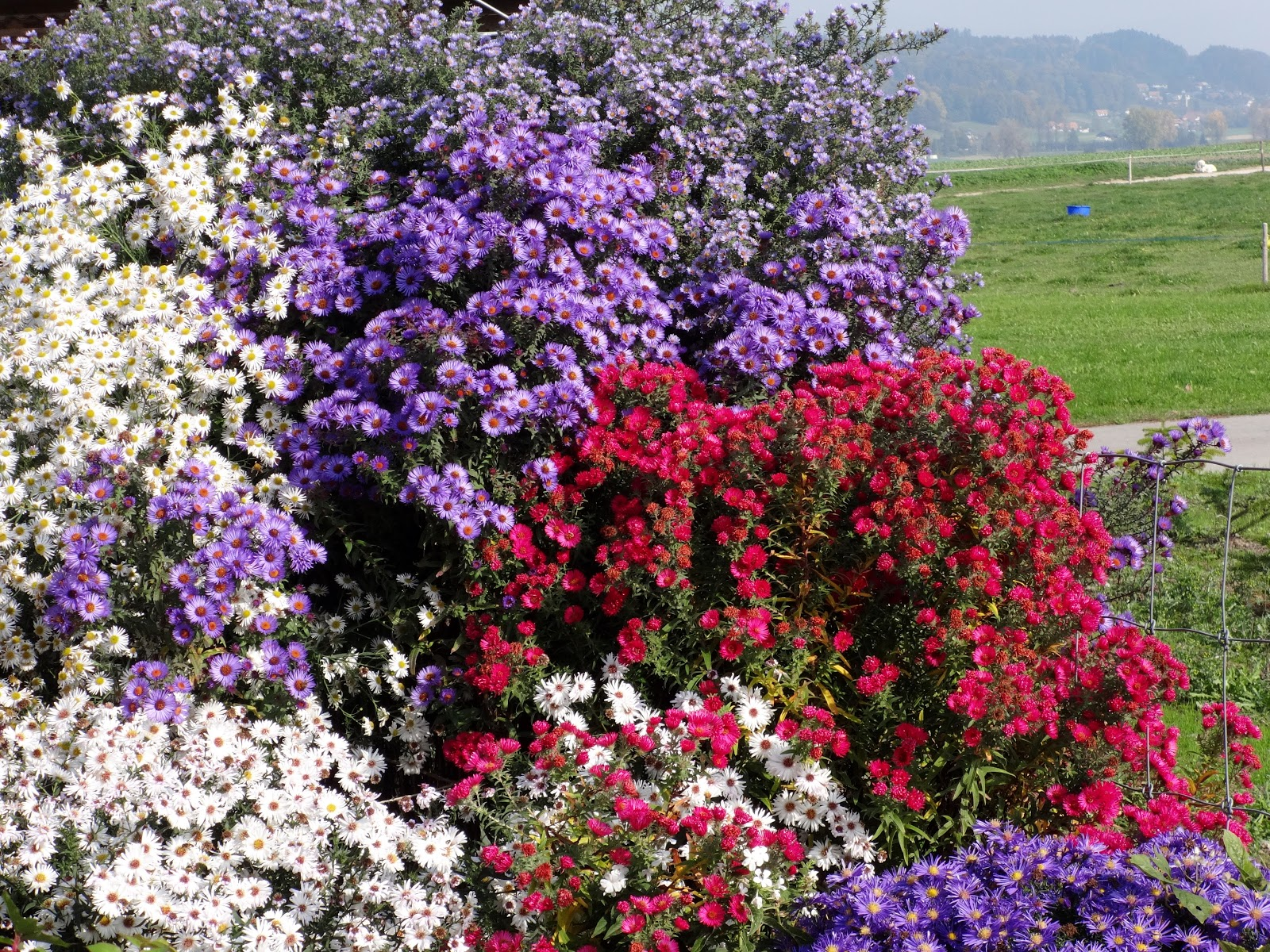 Exquisit Gartentraum Foto Von