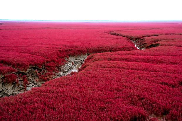 Sitios Naturales Sorprendentes, La Playa Roja en Panjin, China 1