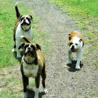 Os Três Boxer - Caminho de Santiago, Santo Antônio da Patrulha