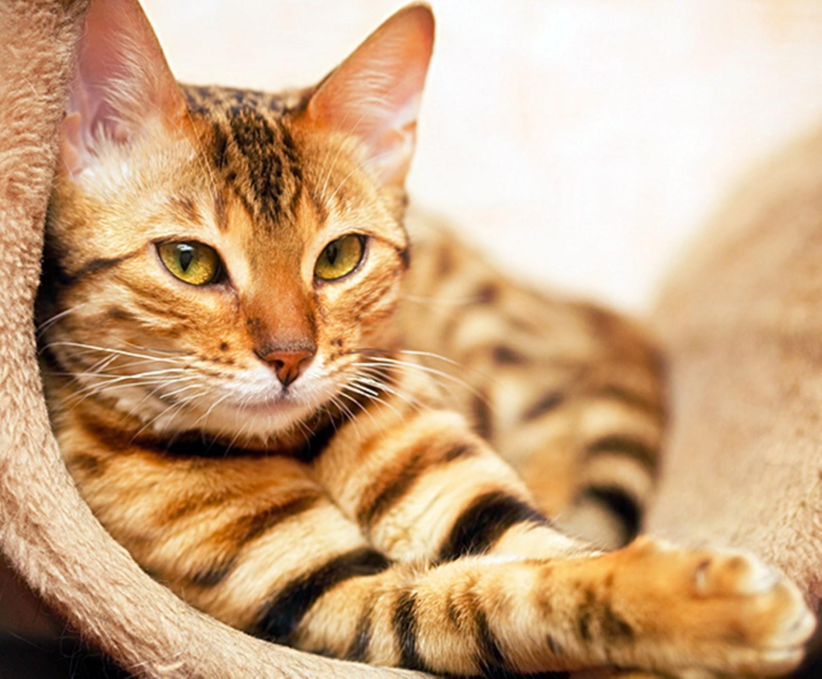 5 Arti Mimpi Kucing Buang Air Menurut Primbon Jawa ...