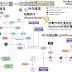 [臨床藥學] 報告用大圖 一次搞懂凝血機轉 (The Coagulation and Fibrinolytic Pathways)