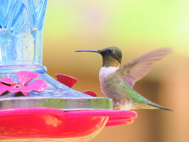 Facts About Hummingbird You Probably Didn't know