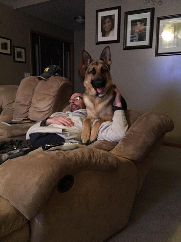 papás que no querían perro en casa