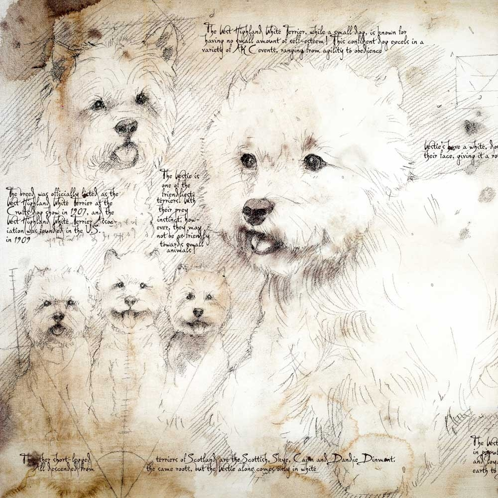 07-West-Highland-Terrier-Study-Leonardo-s-Dogs-Cats-and-Dogs-Drawn-in-the-style-of-Leonardo-da-Vinci