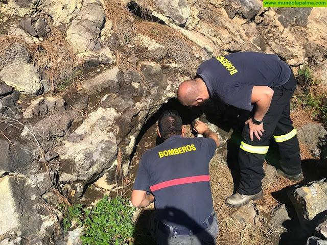 Los Bomberos de La Palma rescataron ayer dos perros de caza