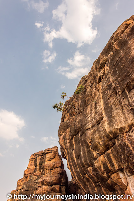 Badami Cave Tree on Rocks