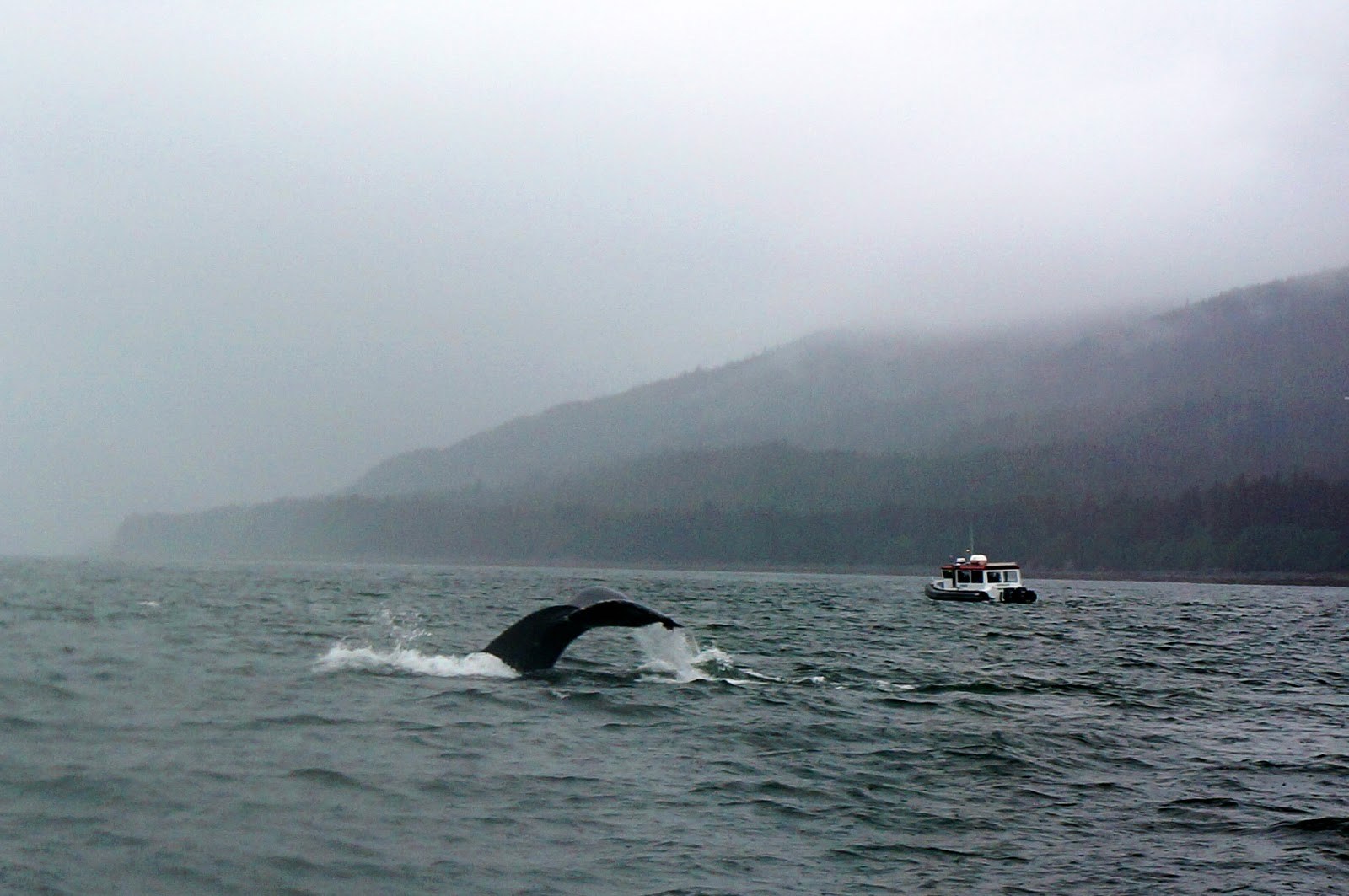 juneau whale watching alaskan cruise review