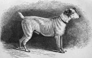 Resultado de imagem para small but vicious dog