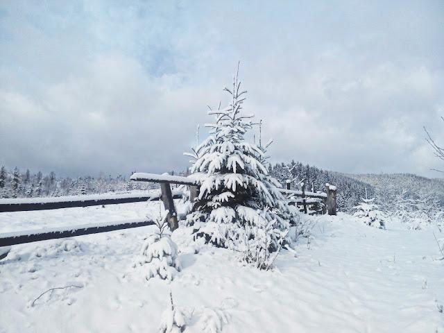 Зима в Буковеле