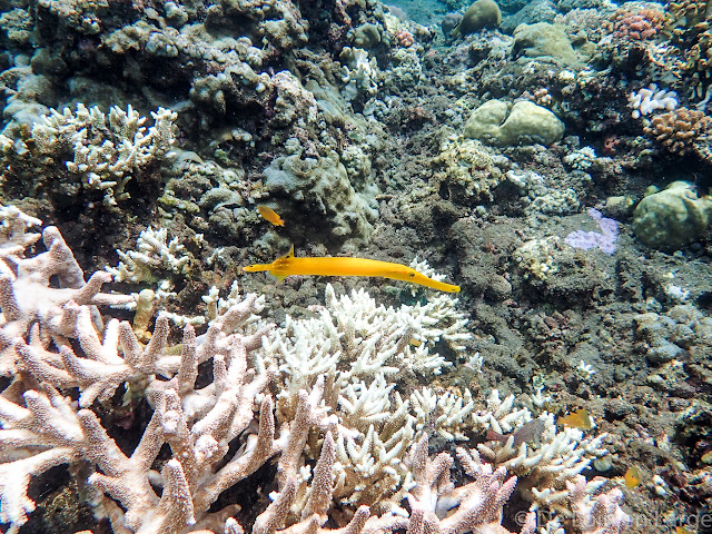 Coral Garden - Baie de Lipah - Bali
