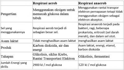 Tael perbedaan respirasi aerob dan anaerob