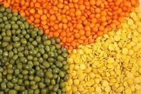 Kacang Lentil