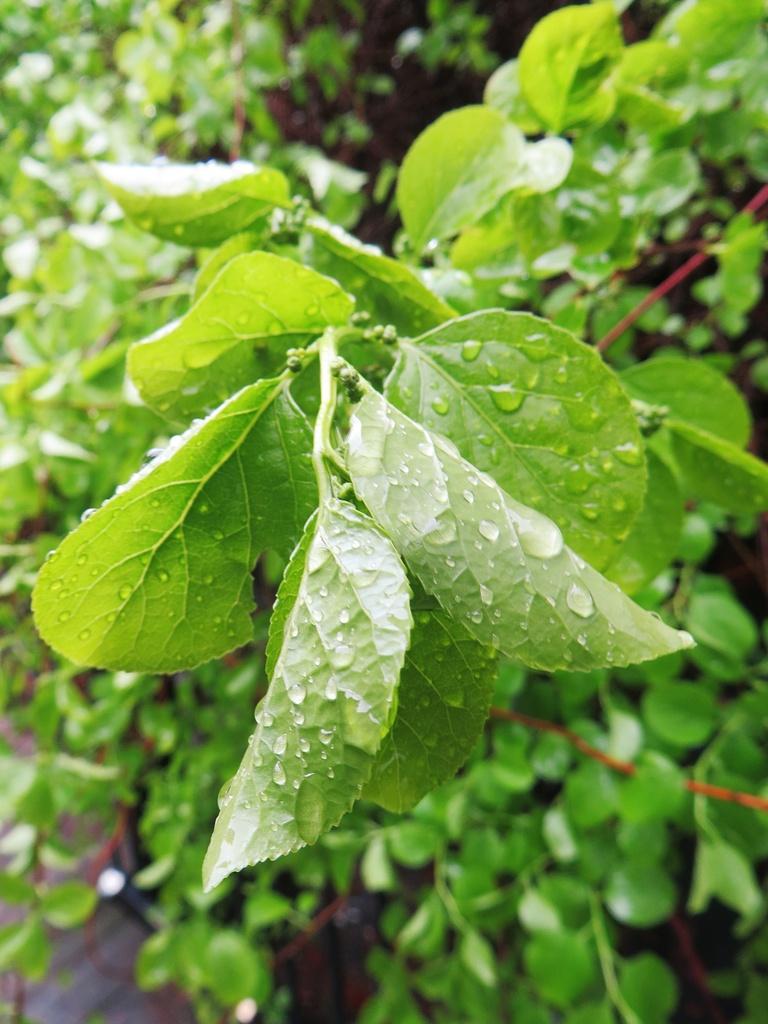 sadepisarat, sateen jälkeen