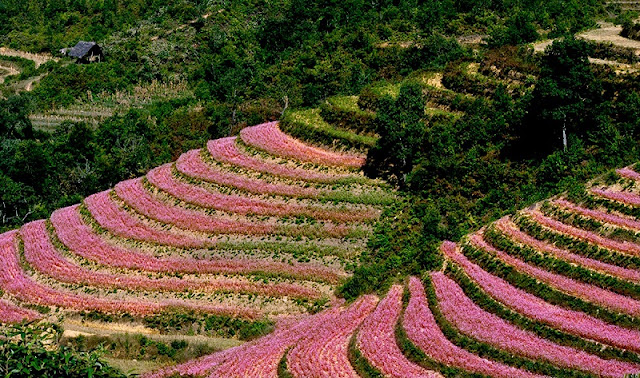 The experience of traveling to Ha Giang in the Buckwheat flower season 2