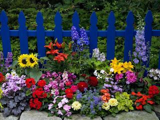 jardinage23 jardin d 39 ornement ao t 2013. Black Bedroom Furniture Sets. Home Design Ideas