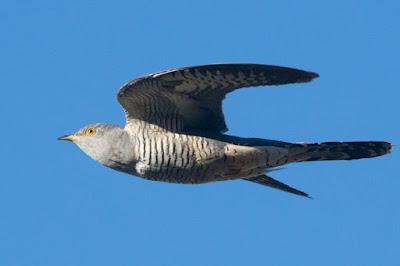 4 Burung Dengan Sistem Pertahanan Terhebat di Dunia