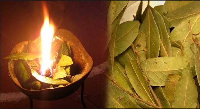 quemar hojas de laurel