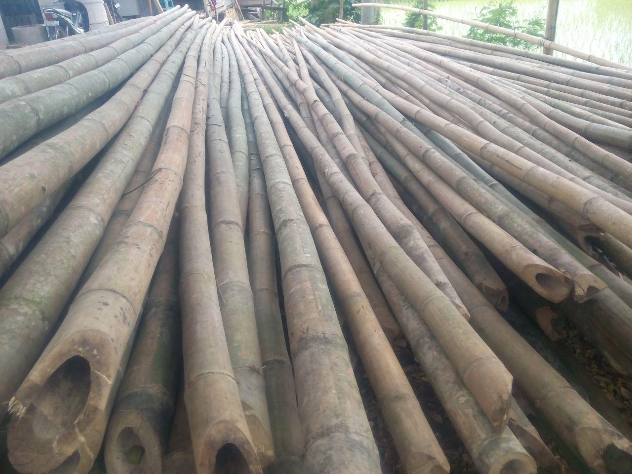 Penjual Bambu di makassar