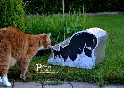 Katze Mimi beschnuppert eine Kratzfigur von FELIX