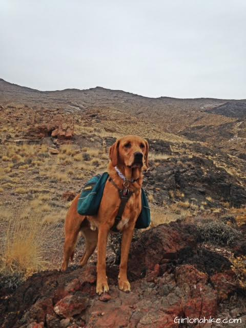 Tetzlaff Peak, Tetzlaff Peak hiking guide, Silver Island Mountains, Hiking in Utah with Dogs