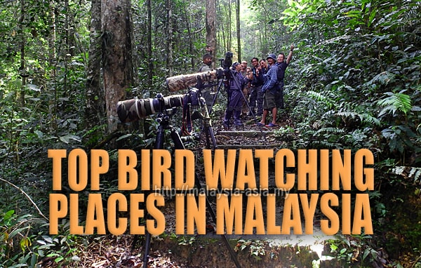 Top Bird Watching Places in Malaysia