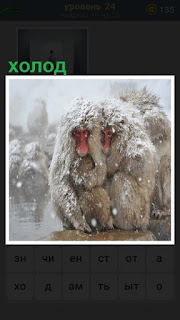 обезьяны замерзли, так им холодно под снегом