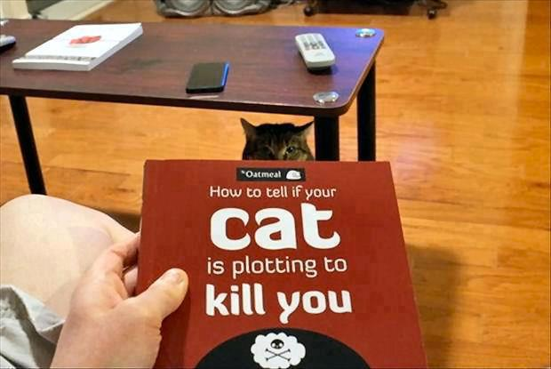 How-to-tell-if-your-cat-is-plotting-to-k