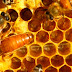 Kraliçe Arının Özellikleri ve Diğer Arı Bireylerinden Farkları