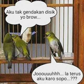 meme gambar burung lucu 14