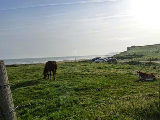 馬 サントーバン= シュル=メール Saint-Aubin-sur-Mer