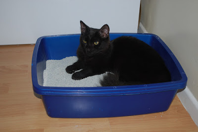 Finding the Right Litter Box for the Cat