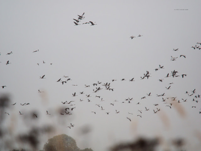 Viele Hundert Vögel sind in der Luft