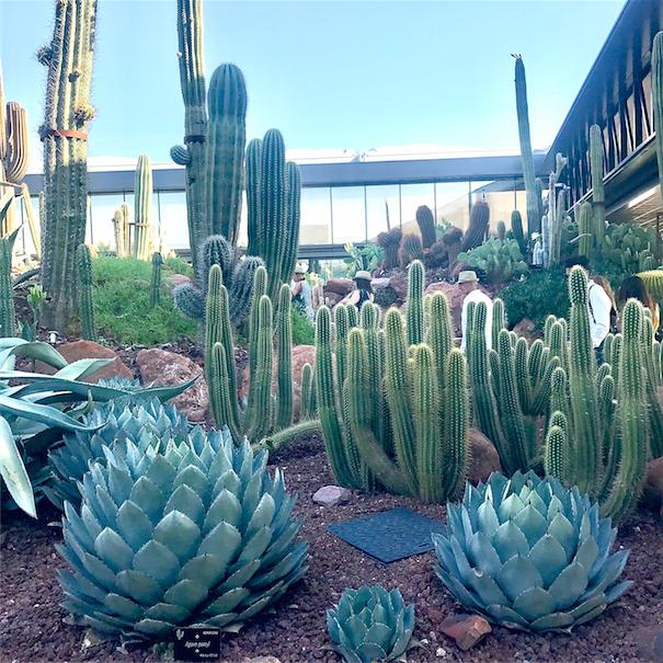 Jardín_cactus_Desert_city