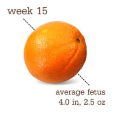 15 Weeks Pregnant Baby Size
