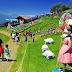 Cingjing Farm -  Tham quan Thụy Sĩ ở Đài Loan