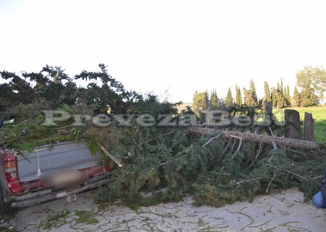 Πρέβεζα: Δέντρο προσγειώθηκε στην καρότσα οχήματος - Φώτο