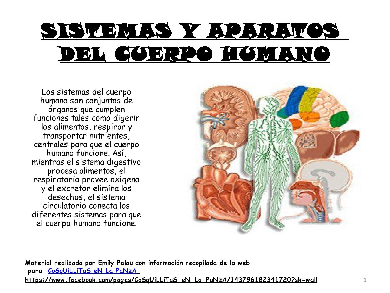 Imagenes De Todos Los Organos Del Cuerpo Humano