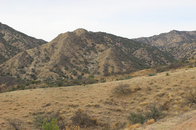 Guided%2BCoues%2BDeer%2BHunts%2Bin%2BSonora%2BMexico%2Bwith%2BJay%2BScott%2Band%2BDarr%2BColburn%2BDIY%2Band%2BFully%2BOutfitted%2B24.JPG