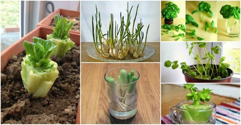 13 Veggies You Can Easily Regrow at Home