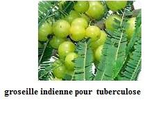groseille indienne efficace pour la tuberculose