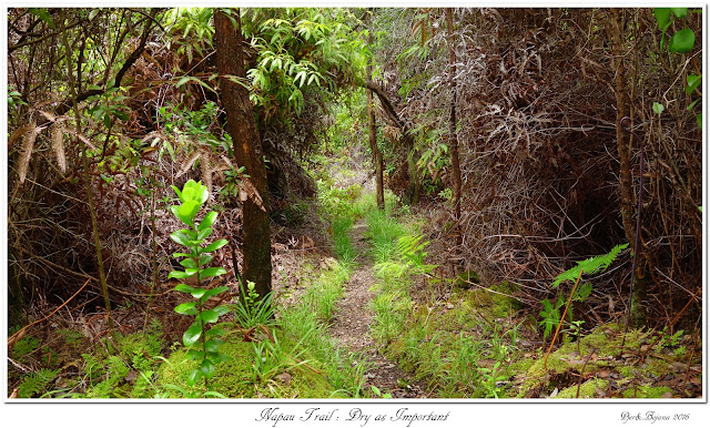 Napau Trail: Dry as Important