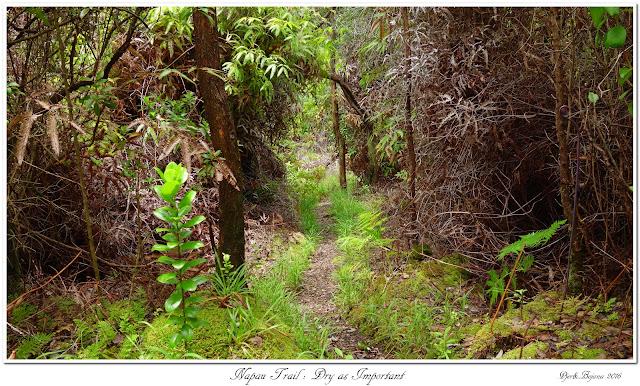 Napau Trail: Dry as Important