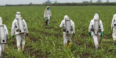 Monsanto's poison of mass destruction