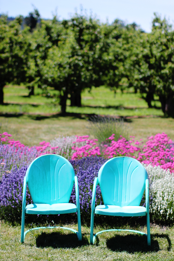 Colorful chairs at Hood River Lavender